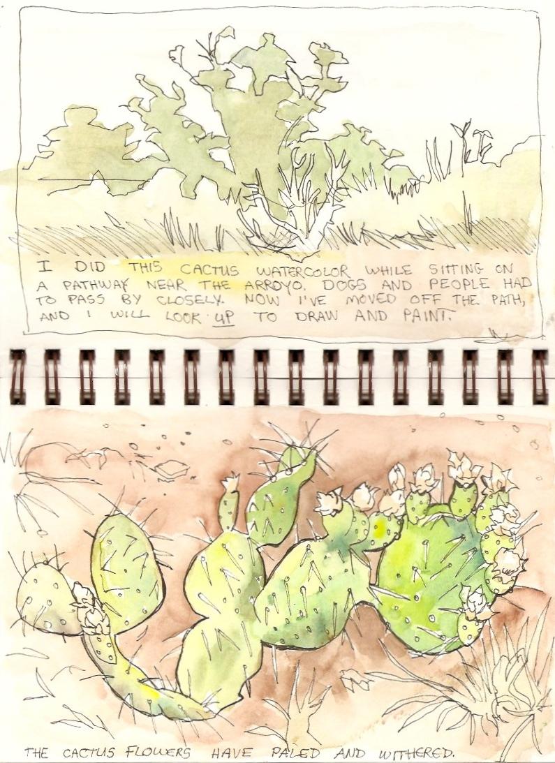 Arroyo Cactus. Sketch.