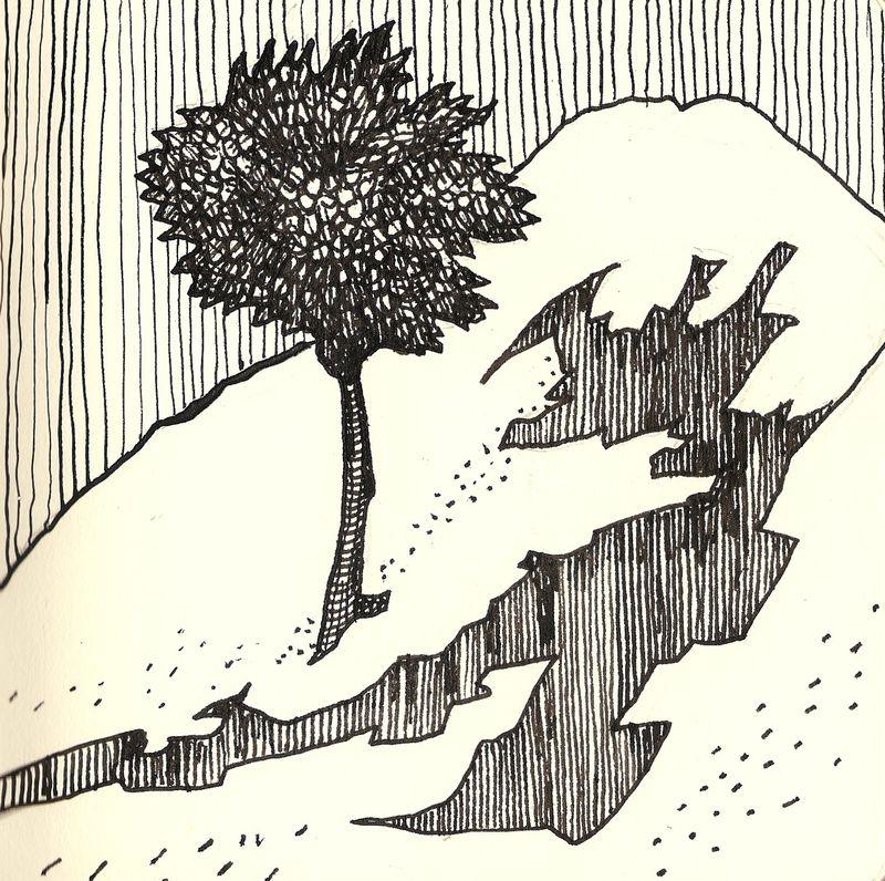 Duccio tree