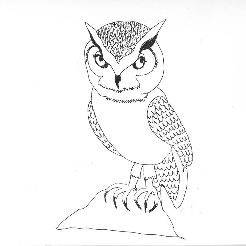 Owl Scanned Image