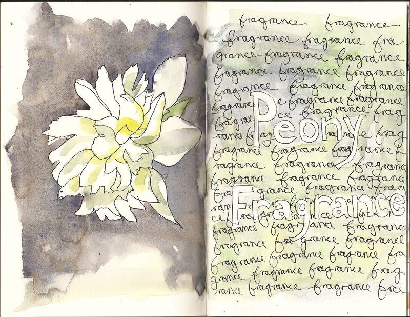 Peony fragrane Scanned Image